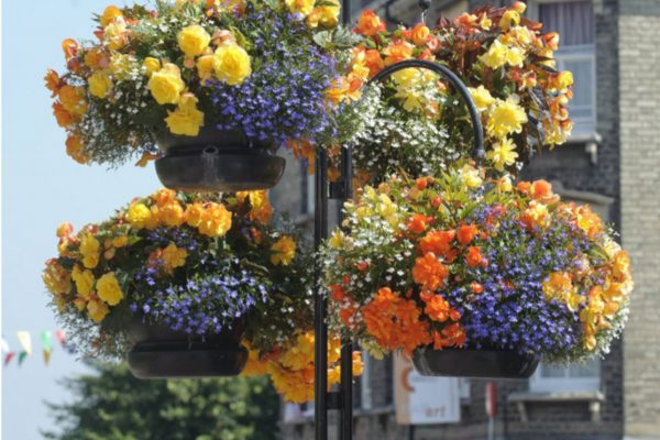 Plenty to cheer for the town as Anglia in Bloom goes online